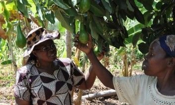 Planting fruit trees for nutrition, food security, and climate resilience can't be a bad investment. But is it as straight forward as it seems? Photo: V. Atakos