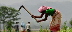 Woman farmer in Nepal. Photo by Neil Palmer (CIAT)