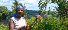 Rose Koech, at her farm in Kenya. She grows fodder trees, shrubs and grass for dairy cattle. ICRAF/Sherry Odeyo
