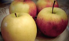 Apples. Photo by Wolfgang Lonien