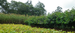 Healthy agroforestry system